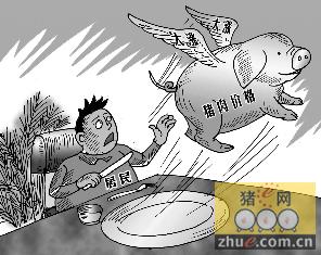 """""""疯狂""""的猪价:猪价暴涨 消费者直呼吃不起"""
