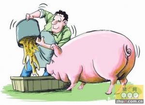 """猪价涨""""疯""""了下一步猪怎么养"""