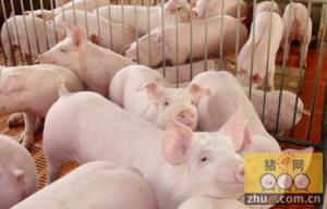 秋季生猪常见病防控措施
