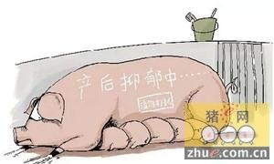 南方高温地区母猪产后厌食症原因分析及注射输液疗法