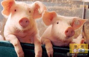 广西陆川县生猪养殖业成功转型