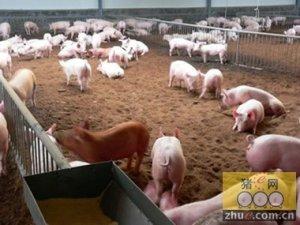 彭博:猪肉和钢铁是占卜中国经济的水晶球