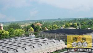 猪场为什么要建绿化隔离带?
