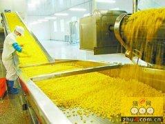 云南:转变农业发展方式 推广青贮饲用玉米种植