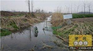 网友诉养猪场离家不足50米:屎尿流到水塘 让人呕吐