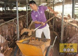 农民养猪年收入150万元 土豪就这样诞生了
