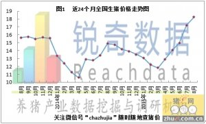 锐奇数据15年8月猪评:9月供需齐增长博弈更剧烈