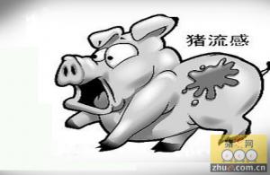 猪流感肆虐印度西部 逾1500人死亡