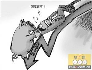 供需处于相对均衡状态 猪价不具备大跌条件
