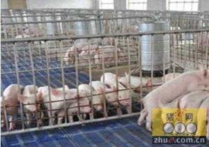 """宁河原种猪场种猪测定进入""""大数据""""时代"""