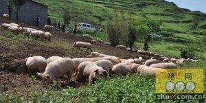 猪场为什么要搞种养一体化?
