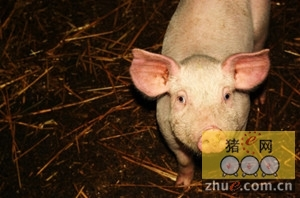 天津空港货运有限公司成功保障种猪包机