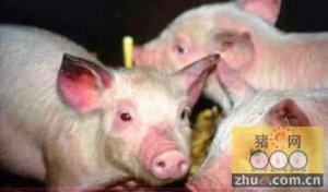 柬埔寨政府表示目前猪蓝耳病(PRRS)处于控制之下