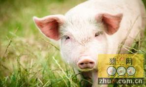 欧美各国测定种猪性能的方法
