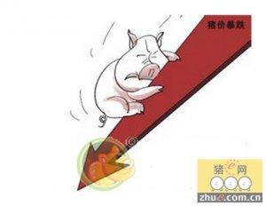 两节临近辽宁沈阳猪肉价便宜了