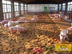 养猪场地道通风的运行情况分析