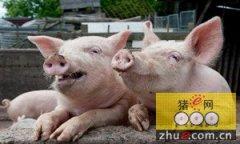 我国种猪不断进口存在外来病风险