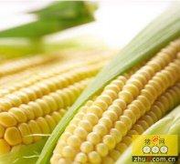 政策落定 玉米产业链料将深度整合