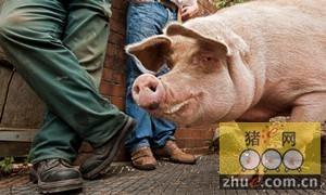 陕西宝鸡:市兽医局在陈仓区洞坡村举办养猪技术培训班