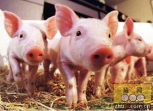 猪场仔猪护理注重八防止