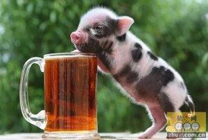 养猪场要找到自己的核心能力并充分张扬
