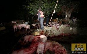 河南省固始县打掉一私屠滥宰生猪窝点