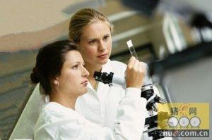 比利时:采集唾液以检测PRRSV的调查更加经济有效