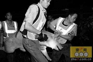 广东:屠户涉私屠暴力抗法被立案网上追逃