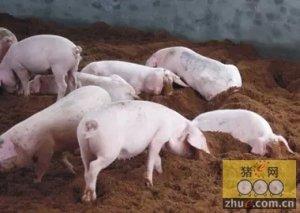 潮湿环境对猪场中的影响