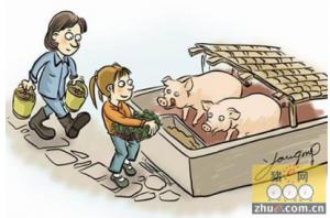 一头猪平均要浪费10%-15%的饲料
