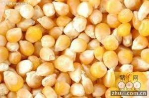 玉米价格持续下降的背后隐藏着什么?