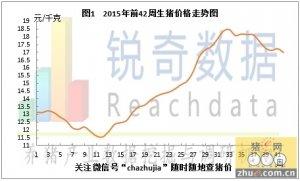 锐奇数据15年42周猪评:南北猪价齐下调破8区域增多