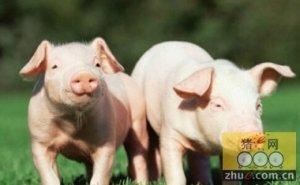 做好防控措施,避免秋冬季保育猪得病