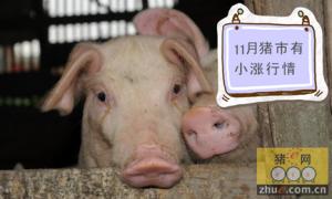 本月行情探底 11月初猪市会有一定程度的小涨