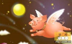 十月已过半 下旬猪价朝哪走?