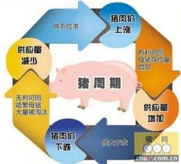 """猪周期""""始终存在 养殖户需保证产能的稳定性"""
