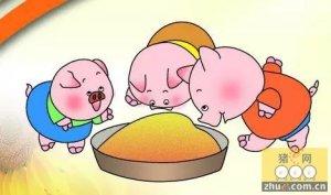 中小养猪场选择饲料的五大误区