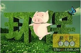 安徽岳西县一养猪场河中排污被查处