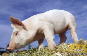 猪伪狂犬病的防控