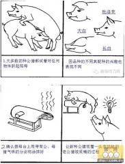 轻松简单的图片教你如何训练公猪采精