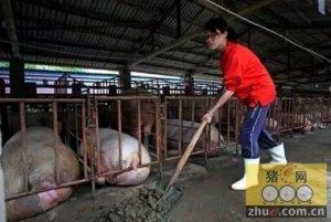 猪场消毒,对消毒剂有影响的三个因素