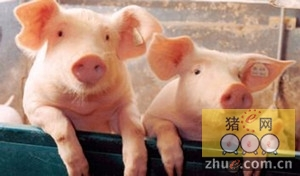 申城加大猪内脏安全监管力度 城管负责现场整治