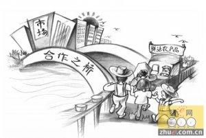 赵明:现代农业合作社的顶层设计(中篇)