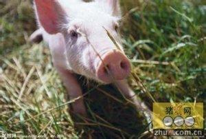需求低迷一直成为压制猪价持续上涨的动力