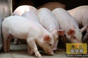 猪场做好防控措施,避免秋冬季保育猪得病