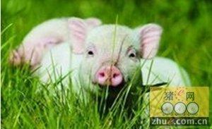 市场观望情绪加重 饲料成本向下拉低猪价高度