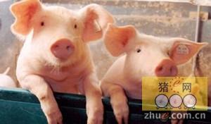 中国猪肉市场仍然是北美和欧盟市场生猪价格前景的通配符