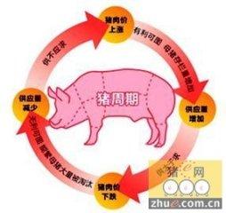 """应对""""猪周期"""" 破解价格怪圈"""