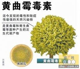 黄曲霉毒素危害及防治措施