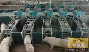 养猪场供水系统小发明